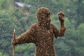 Maged.CrossPollination.BeeSwarm